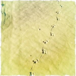 bird_feet_across_the_marina